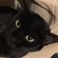 Adopt A Pet :: Judy - Franklin, WV