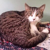 Adopt A Pet :: Oscar - Port Clinton, OH