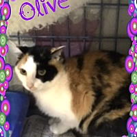 Adopt A Pet :: Olive - Buffalo, IN