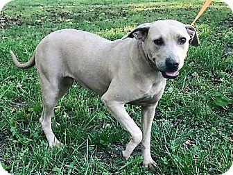 Terrier (Unknown Type, Medium) Mix Dog for adoption in Starkville, Mississippi - Sadie