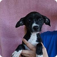 Adopt A Pet :: Alaska - Oviedo, FL
