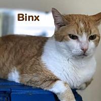 Adopt A Pet :: Binks - Sarasota, FL