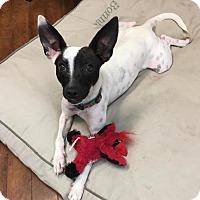 Adopt A Pet :: Shadow - Charlotte, NC