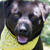 Adopt A Pet :: Parker - Cincinnati, OH