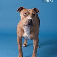 Adopt A Pet :: Chia - Yuma, AZ