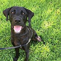 Adopt A Pet :: Cade - Denton, TX