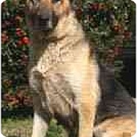German Shepherd Dog Dog for adoption in West Los Angeles, California - Opal
