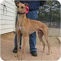 Adopt A Pet :: Bobby - Oak Ridge, NC