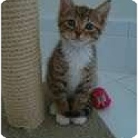 Adopt A Pet :: Tinky - Coral Springs, FL