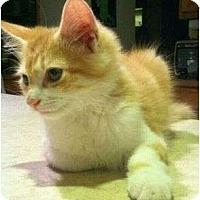 Adopt A Pet :: Ostin - Centerburg, OH