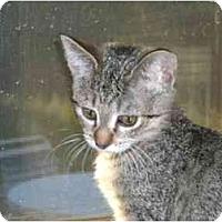 Adopt A Pet :: Mandy - Lombard, IL
