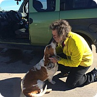 Adopt A Pet :: Copper Roswell - Albuquerque, NM