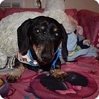 Adopt A Pet :: Cary Grant - Decatur, GA