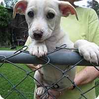 Adopt A Pet :: RUMER - Lincolndale, NY