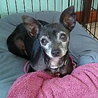Adopt A Pet :: Mitzie - Ruskin, FL
