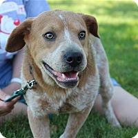 Adopt A Pet :: Ash - Elyria, OH