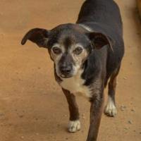 Adopt A Pet :: Lacey - Shelby, NC