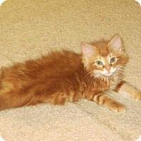 Adopt A Pet :: GUINESS - Rockford, IL