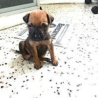 Adopt A Pet :: Jed - MIAMI, FL