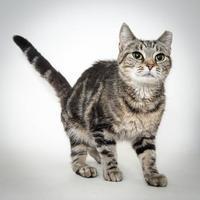 Adopt A Pet :: Tina - Dayton, OH