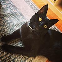Adopt A Pet :: Miyu - New York, NY