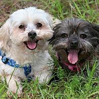 Adopt A Pet :: Happy and Shorty - Saratoga, NY
