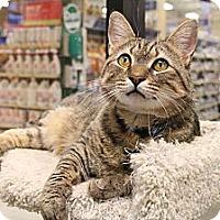 Adopt A Pet :: Carter & Dozer - Chesapeake, VA