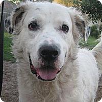 Adopt A Pet :: Murphy - Jacksonville, FL