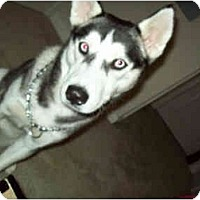 Adopt A Pet :: Sky - Jacksonville, NC