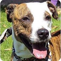 Adopt A Pet :: Roxy - Oceanside, CA