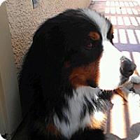 Adopt A Pet :: balto - Westtown, PA