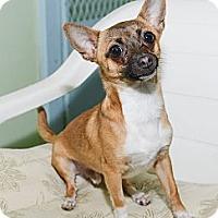 Adopt A Pet :: Johnny - New York, NY