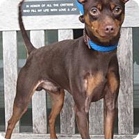 Adopt A Pet :: Earl (York PA SPCA) - Malaga, NJ