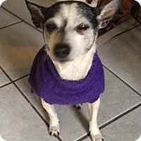 Adopt A Pet :: Sweet Pea - Crowley, LA