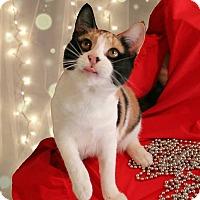 Adopt A Pet :: Kabuki - McDonough, GA