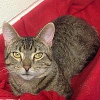 Adopt A Pet :: Oscar Owens - Anderson, IN