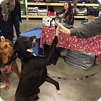 Adopt A Pet :: Noah - Bellingham, WA
