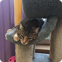 Adopt A Pet :: Pinkee - Northbrook, IL
