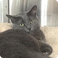 Adopt A Pet :: Luna - Roseville, MN