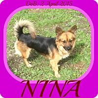Adopt A Pet :: NINA - Mount Royal, QC