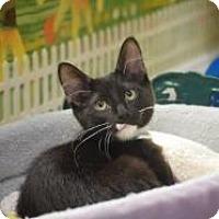 Adopt A Pet :: Ghirardelli - Dallas, TX