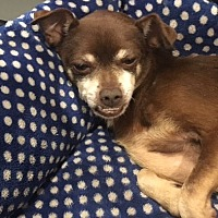 Adopt A Pet :: Chiko - Miami, FL