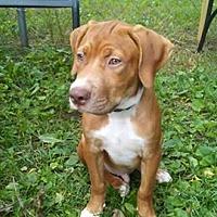 Adopt A Pet :: Mateo- located in NY - Trenton, NJ