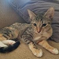 Adopt A Pet :: Rachel - Surprise, AZ