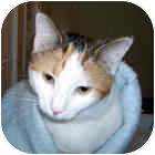 Calico Cat for adoption in Milledgeville, Georgia - Tory