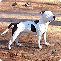 Adopt A Pet :: *CASH - Winder, GA