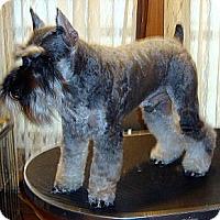 Adopt A Pet :: Paddy Boy - Southeastern, KS