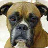 Adopt A Pet :: Uncle Milty - Sunderland, MA