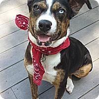 Adopt A Pet :: Gina - Marlton, NJ