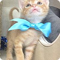 Adopt A Pet :: Christoff Anna - Chandler, AZ